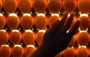 Покровские яйца